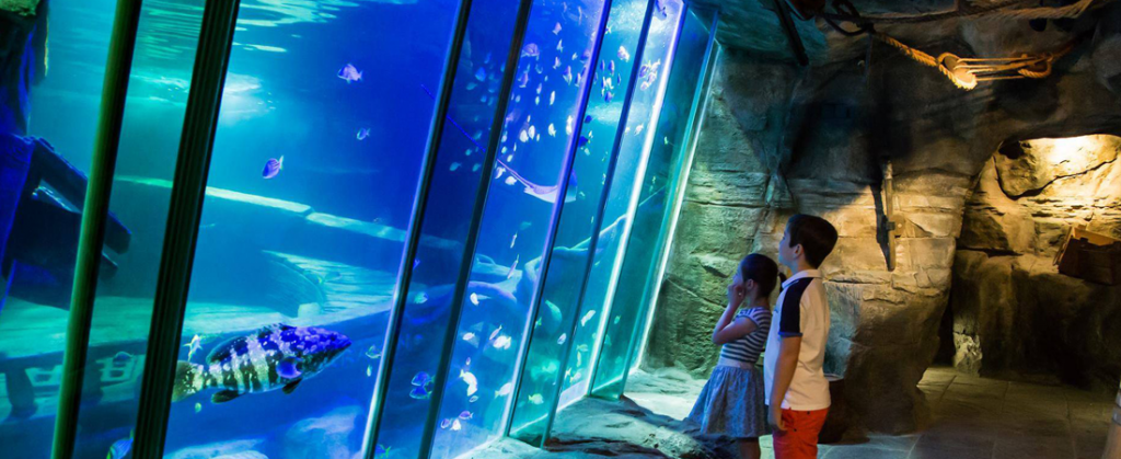 Finding Nemo and Dory Day at Exploris - Travel Ireland Coaches